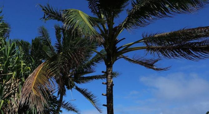 Няма данни за ранени след труса на Карибите