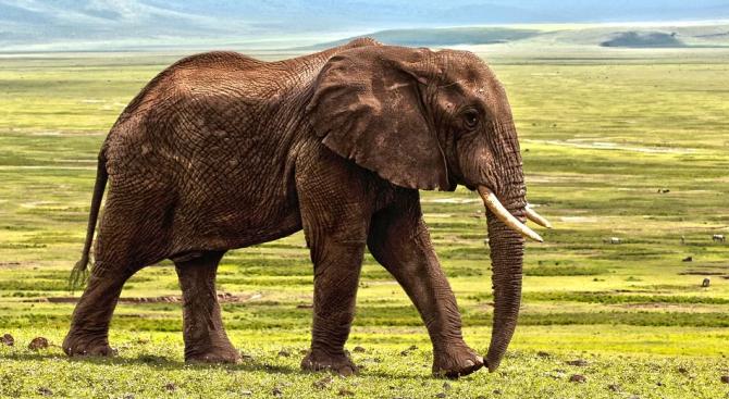 Този месец за пръв път от години слон бе забелязан
