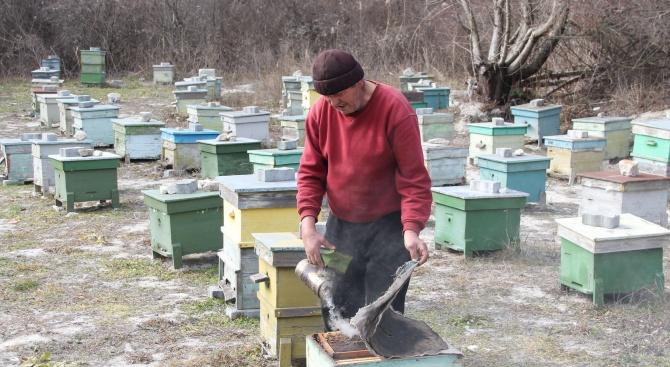 Времето е неестествено за сезона, пчелите са изпаднали в зимен