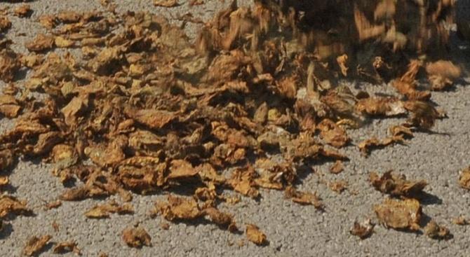 Иззеха 230 килограма тютюн без бандерол
