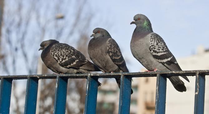 Областният управител на Хасково свиква общинските епизоотични комисии заради птичия грип