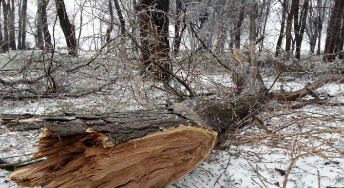 Силният вятър събори дървета край Монтана