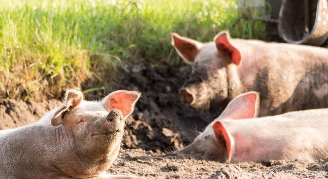 Личните стопанства за отглеждане на селскостопански животни подлежат на регистрация