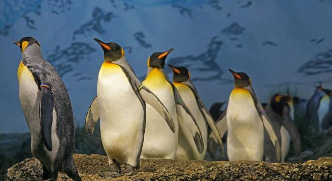 Езикът на пингвините следва същите правила като човешката реч