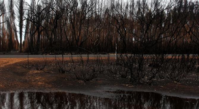 В австралийския щат Нов Южен Уелс падна най-обилният дъжд за последните близо 20 г.