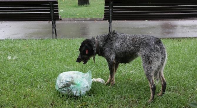 На 14 февруари, Св. Валентин, 22 кучета от приютите на