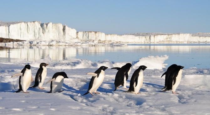 Броят на пингвините в някои части на Антарктида е намалял драстично