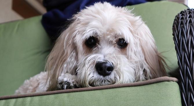 Куче спаси стопаните си от отровен газ в САЩ