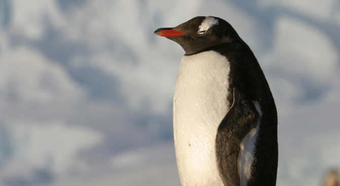 Броят на антарктическите пингвини в някои колонии в Западна Антарктида