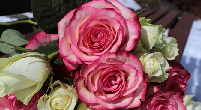 Германски учени установиха, че леки аромати, като този на розите,