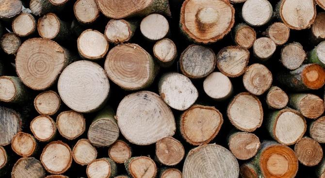 Арест за двама за кражба на дърва