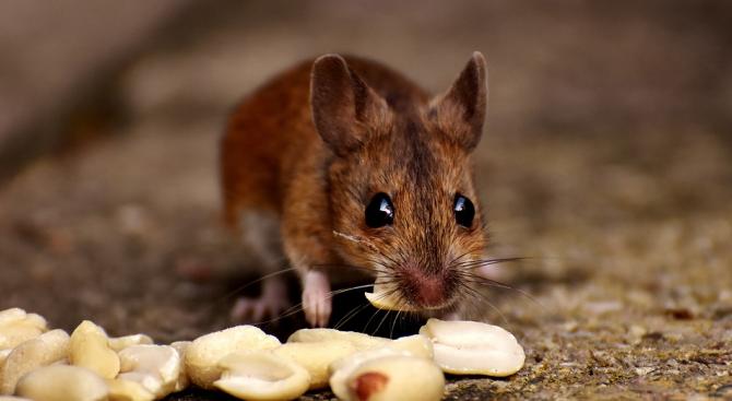 Битката между мишки на метростанция спечели награда от престижен фотоконкурс