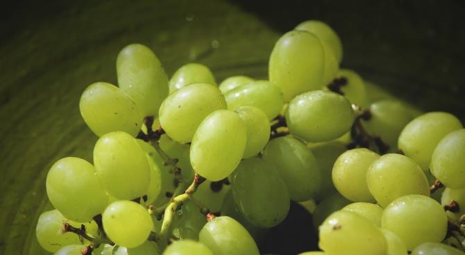 Земеделски производител изхвърлил тонове грозде за ракия вместо да ги достави по схемата за училищен плод