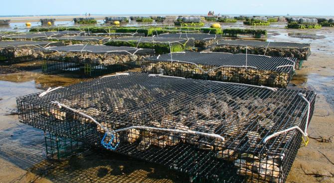 Издирват собствениците на мидени ферми край Маслен нос