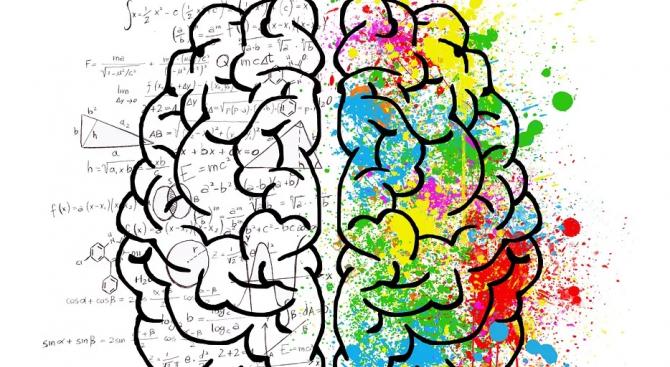 Специалисти опровергаха общоприета хипотеза за човешкия мозък