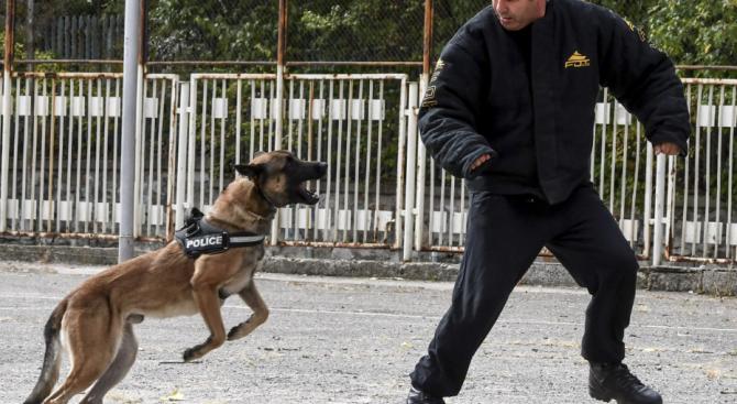 Полицаи си спретнаха гонка с помориец, с куче намериха наркотици в колата му
