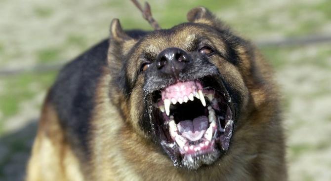 Куче нахапа инкасатор, мъжът остана без част от палеца си