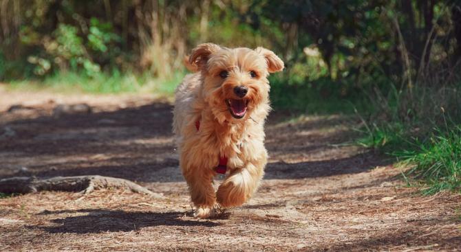 Семейство от Тексас намери изгубеното си куче след 14 години
