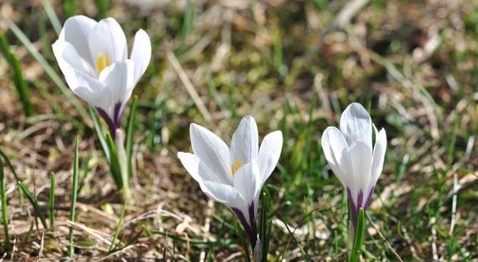 РИОСВ - Шумен засилва контрола си по опазване на диворастящите растения