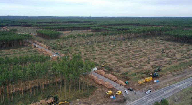 Германски съд разреши на Тесла да изсича дървета