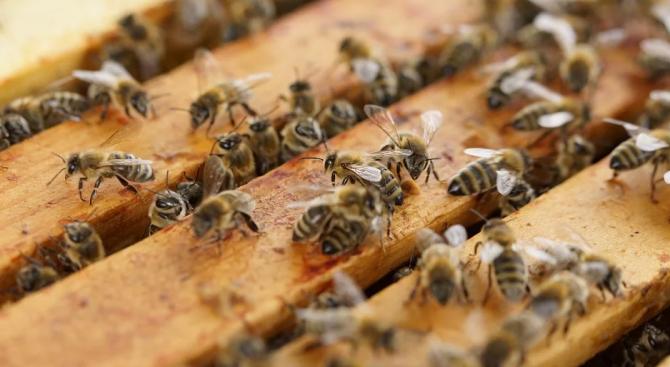 Земните пчели са способни да разпознават предмети чрез допир