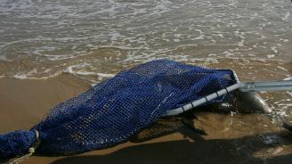 Рекорден брой мъртви делфини са изхвърлени на западното крайбрежие на Франция