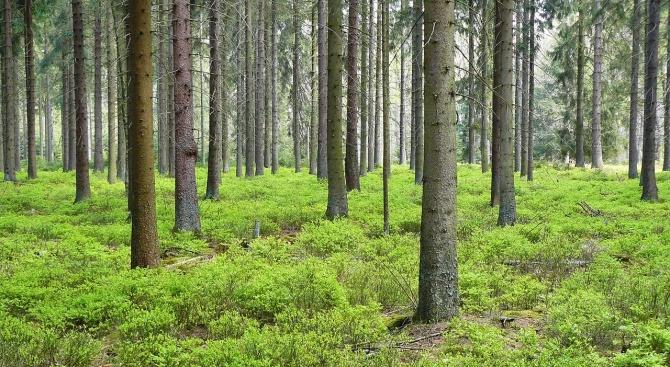 За седмица: 366 проверки в горските стопанства в Търговищко