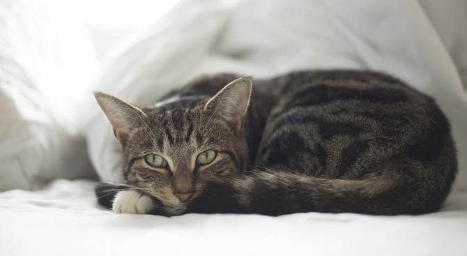 Домашните котки често разпространяват коронавируси