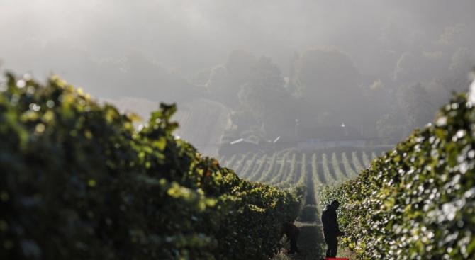 Британски министър иска нова схема за прием на сезонни работници в селското стопанство