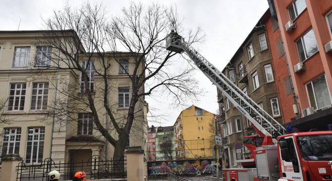 Пожарникари орязаха опасно дърво в двора на столично училище