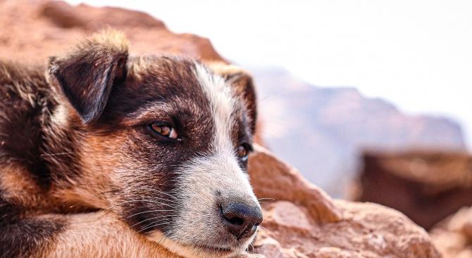 Ресторант в Перу дава храна на бездомни кучета