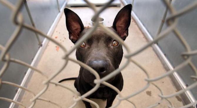 Домашно куче е поставено под карантина в Хонконг заради съмнение за зараза с коронавируса
