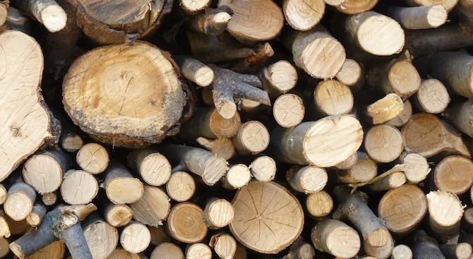 Арестуваха двама за незаконна дървесина