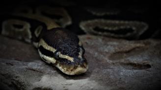 Семейство живее с повече от 150 змии в дома си без да подозира