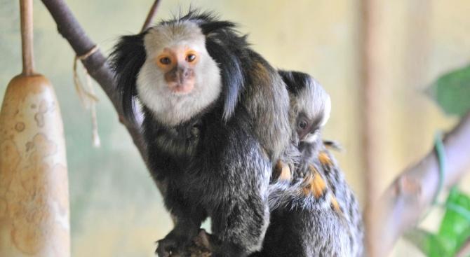 Зоологическата градина в София ще остане затворена за посещение до