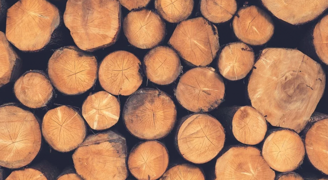 Разкриха кражба на дърва за огрев