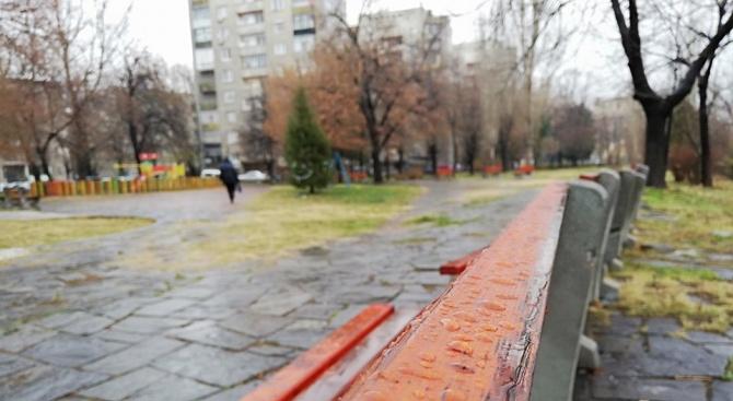 Община Асеновград ще засади 100 дървета