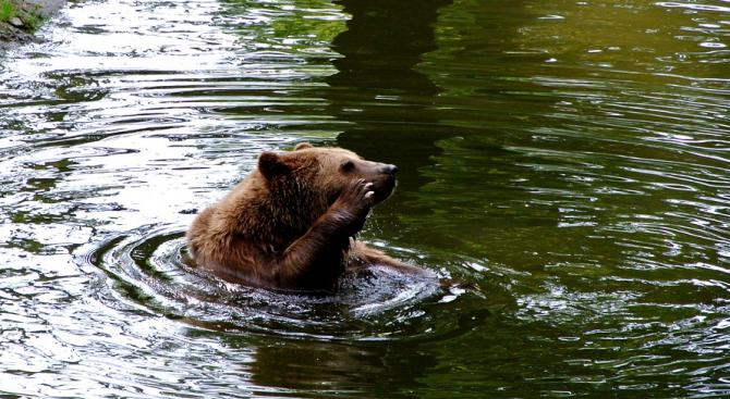 Затворен за посещения е Зоокътът в Павликени. Преустановяват се разходките