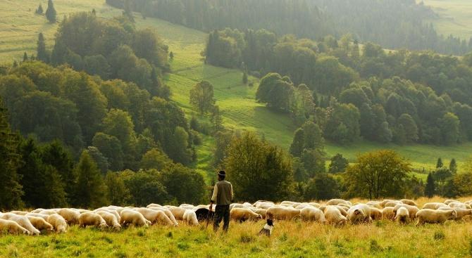 Земеделските стопани, които имат ниви, овощни градини, лозя, оранжерии и