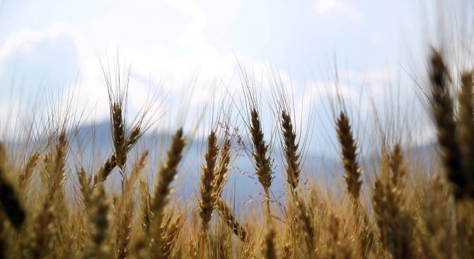 България е аграрна страна - тя е способна сама да