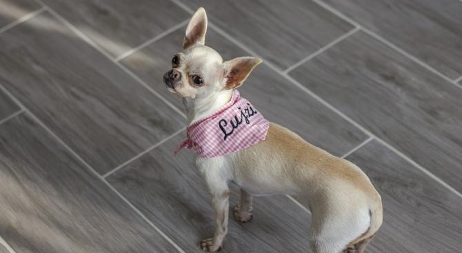 Самоизолирал се заради коронавируса стопанин праща кучето си на пазар