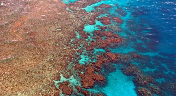 Големият бариерен риф избеля за трети път в рамките на 5 години