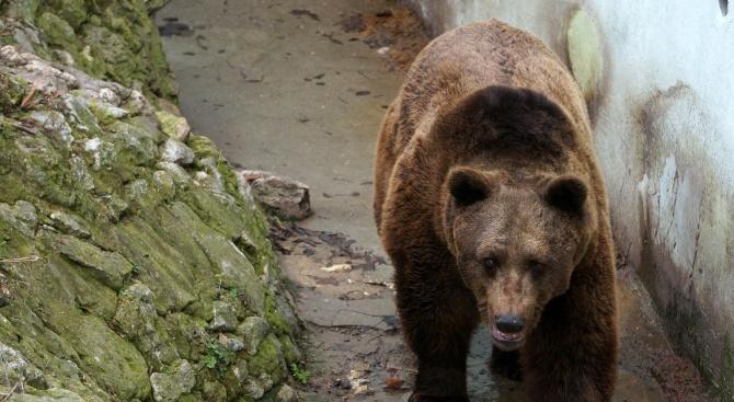 Зоологическата градина в София разкри как животните пребивават по време