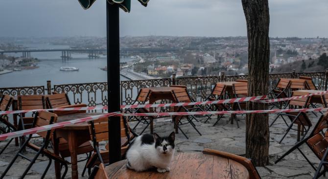 Само котките останаха по улиците на Истанбул