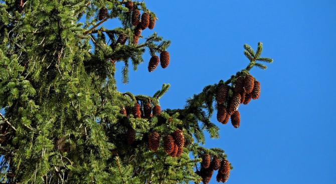 Ботаници установиха кои дървета пречистват най-добре въздуха от замърсяване