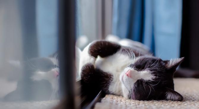 Домашна котка е с положителен резултат за COVID-19