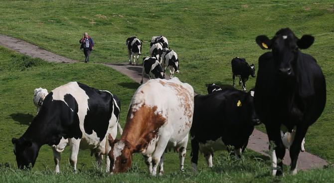 От 15 април животновъдите могат да кандидатстват за подпомагане по мярката за хуманно отношение към животните от ПРСР