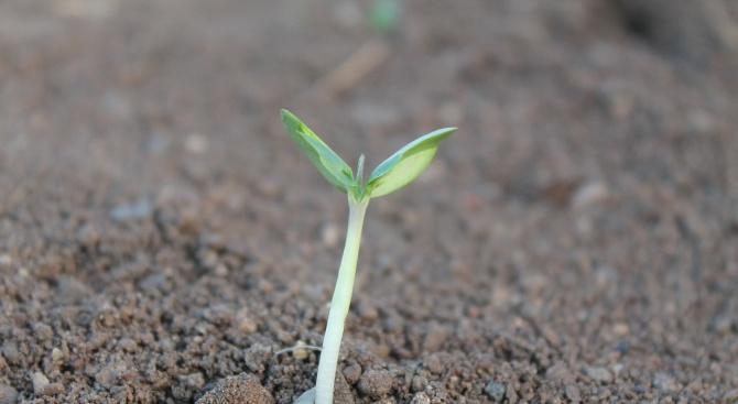 80 % от земеделците у нас са на ръба на оцеляването?
