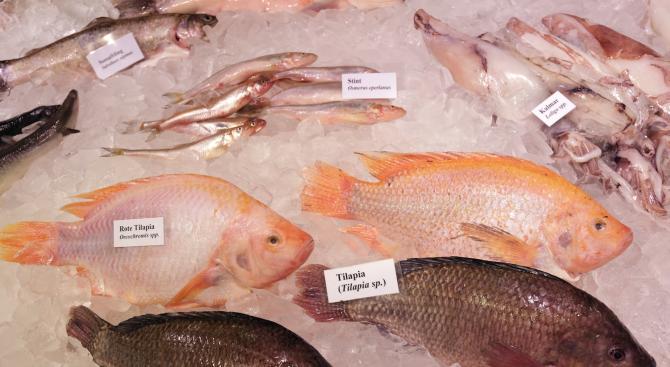 Призоваха французите да консумират повече риба