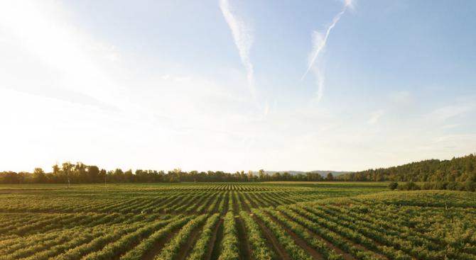 Испания разчита на безработни и чужденци за земеделска работа